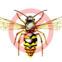 Desinsectación de avispas en Zaragoza