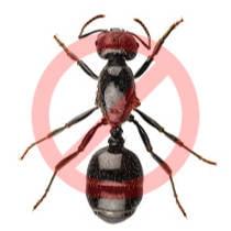 Desinsectación de hormigas en Zaragoza