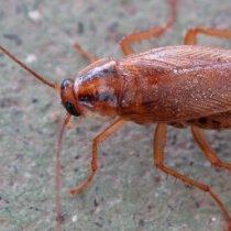 Desinsectación de insectos rastreros en comunidades de vecinos