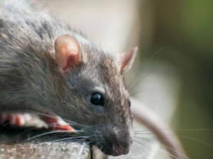 Tratamiento de choque contra especies plaga en residencias y centros de día
