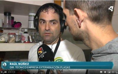 Nuestro director técnico en Aragon TV hablando sobre termitas