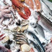 Control de plagas pescadería Zaragoza